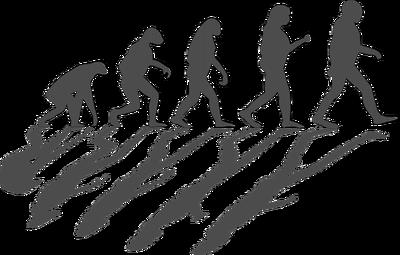 Evolution1295256_640