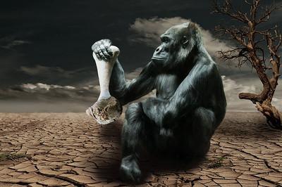Gorilla834251_640