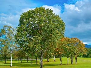 Tree_woods_000271
